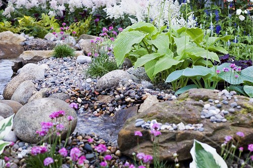 hosta by side of stream in garden bild kaufen living4media. Black Bedroom Furniture Sets. Home Design Ideas