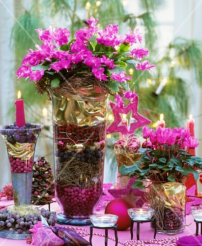 Cactus Decorated For Christmas: Christmas Cactus And Cyclamen With Christmas Decorations