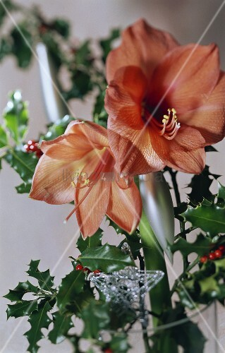 Amaryllis and holly christmas decoration bild kaufen for Amaryllis christmas decoration