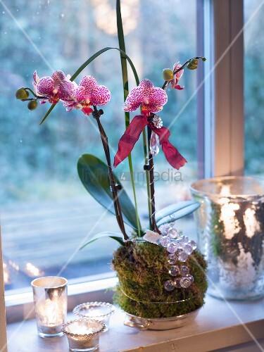 weihnachtlich dekorierte orchidee bild kaufen living4media. Black Bedroom Furniture Sets. Home Design Ideas