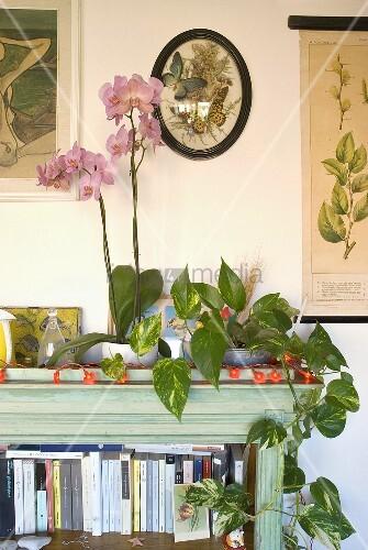 schrankecke mit roter lichterkette und gr npflanze neben orchidee im topf bild kaufen. Black Bedroom Furniture Sets. Home Design Ideas