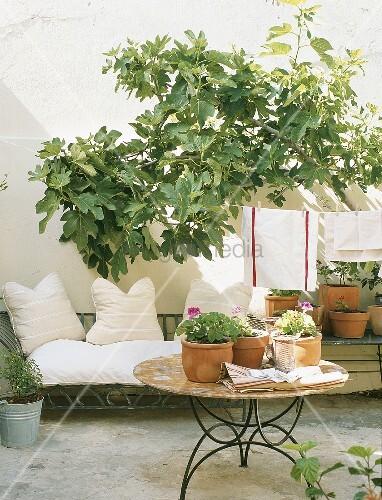 eine wei e couch und w scheleine unter feigenbaum im garten bild kaufen living4media. Black Bedroom Furniture Sets. Home Design Ideas