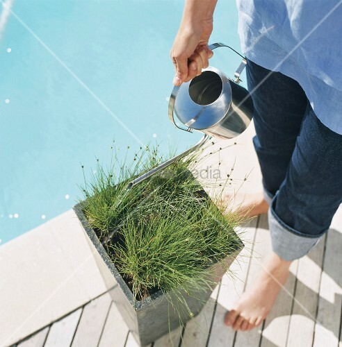 man watering plants in container next to swimming pool bild kaufen living4media. Black Bedroom Furniture Sets. Home Design Ideas