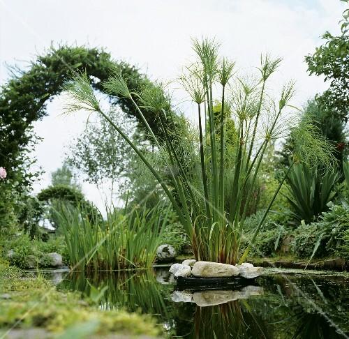 Wasserpflanzen Teich Kaufen : teich mit wasserpflanzen bild kaufen living4media ~ Michelbontemps.com Haus und Dekorationen