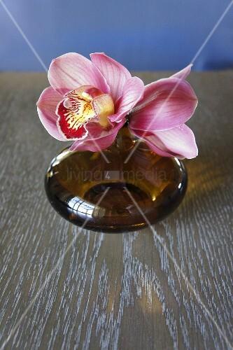 orchidee in brauner vase bild kaufen living4media. Black Bedroom Furniture Sets. Home Design Ideas
