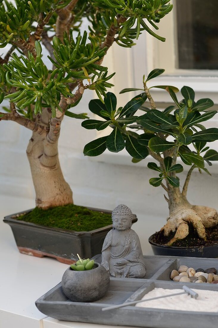 Bonsai in your Garden
