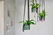 Neon Planters