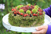 Cake for Birds