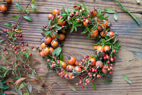 Discover Rose Hips