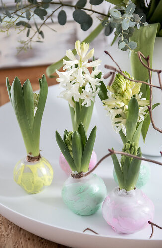 Hyacinth Heaven
