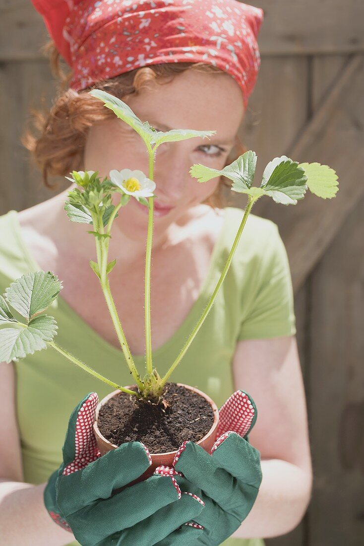 Young woman holding strawberry plant