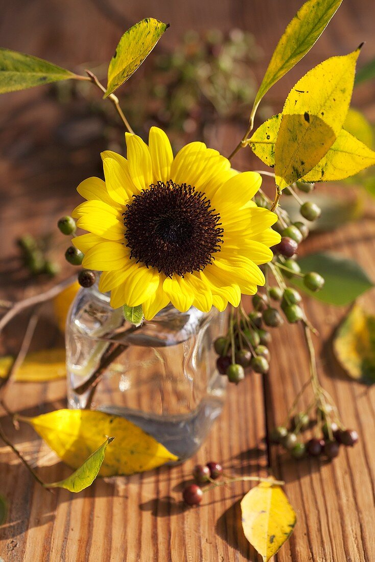 A sunflower in a jar with chokeberries