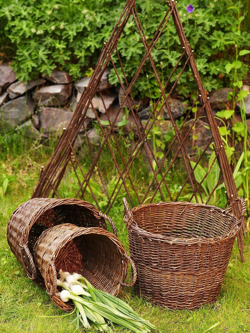 A three piece wicker basket set with fresh garlic in front of a metal trellis