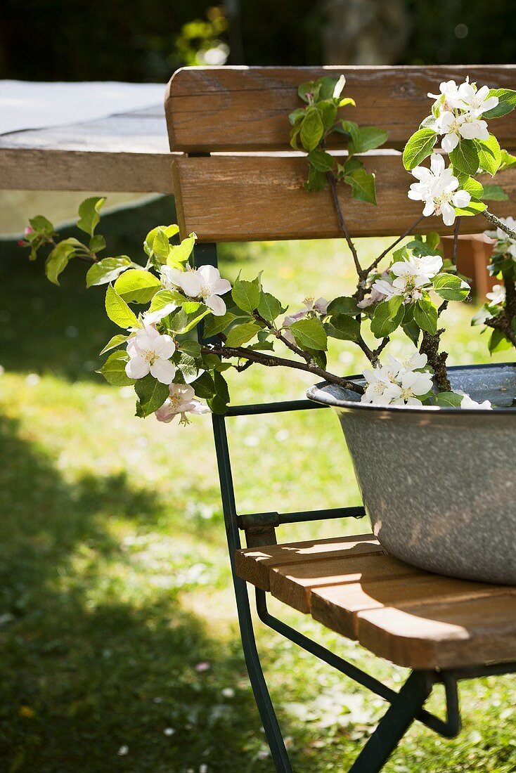 A sprig of cherry blossoms in an enamel bowl on a garden chair