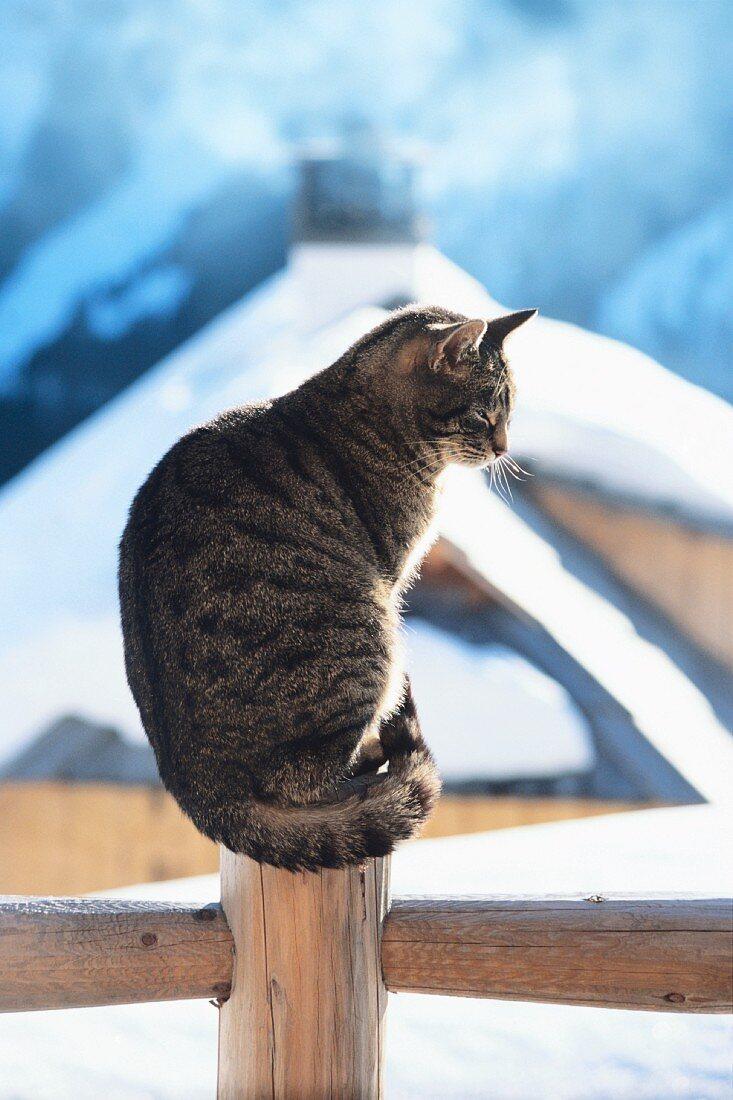 Katze sitzt am Zaun vor verschneiten Almhütten
