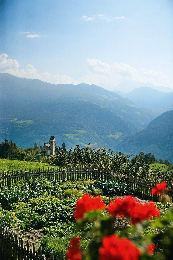Blick aus einem sommerlichen Bauerngarten auf die umliegenede Berglandschaft, Oberhauserhof, Südtirol