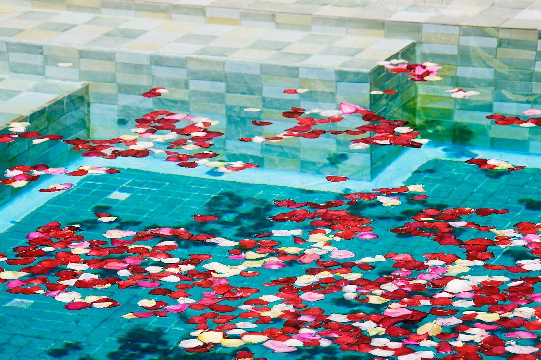 Swimming Pool with Rose Petals