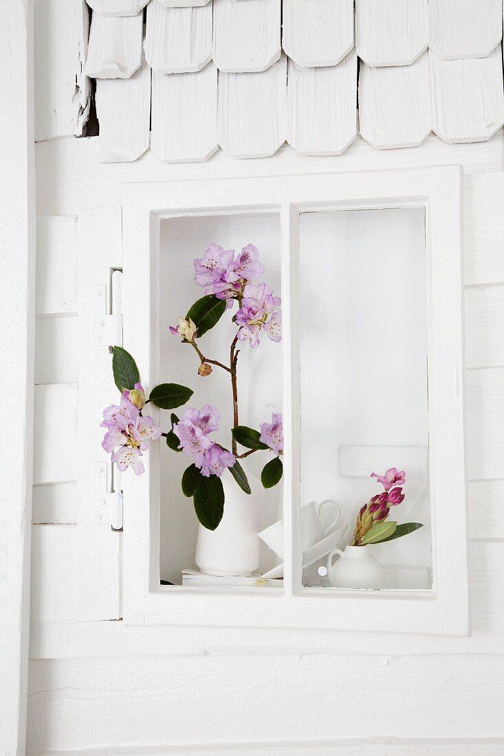 Rhododendron (variety: 'Albert Schweitzer') in window niche of white-painted model house