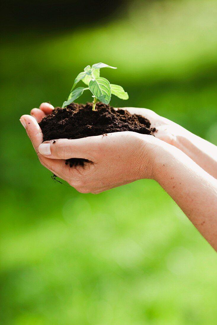 woman holding sapling in heap of earth