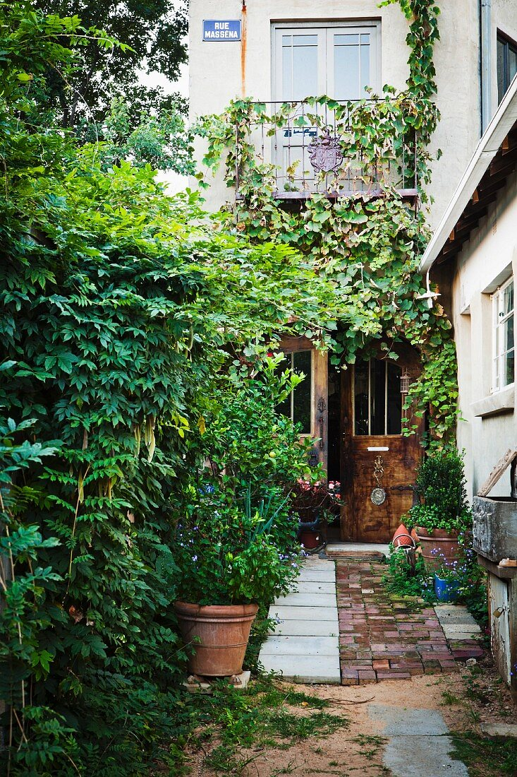 Densely leafy front path leading to half-open front door of multistorey residential house