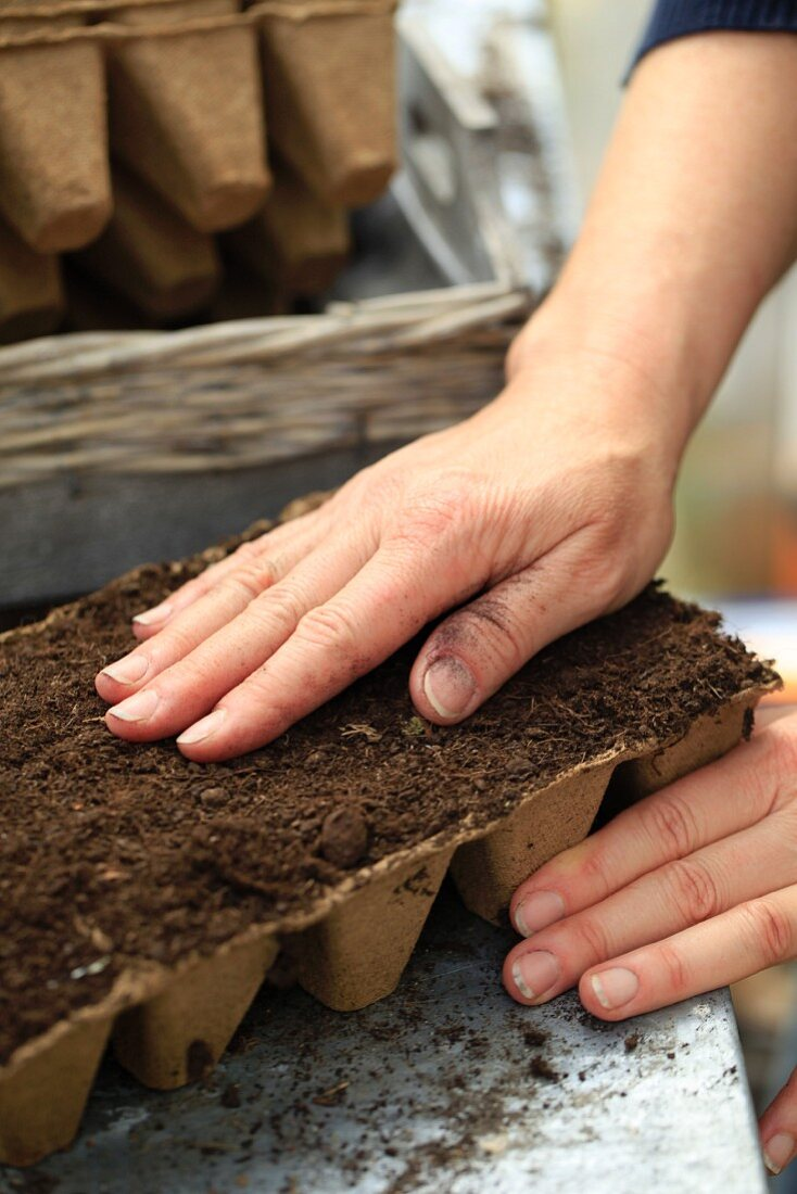 A lady's hand smoothing potting soil in a seed starter