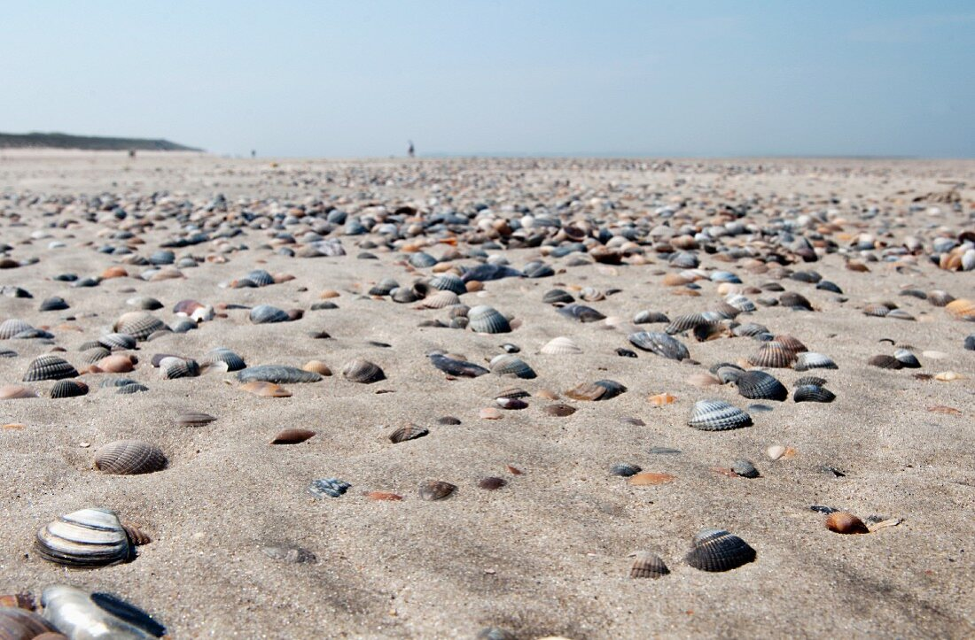 Mussel shells on the beach