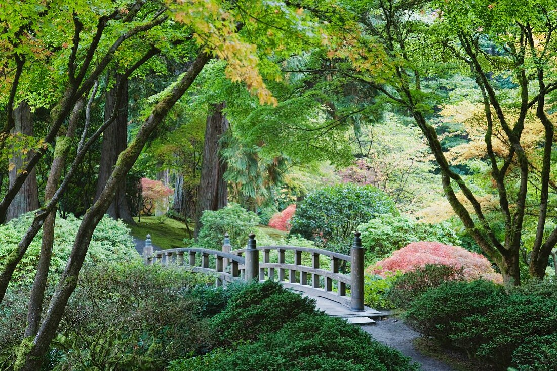 Authentic, Japanese arch bridge in the Tea Garden in Portland