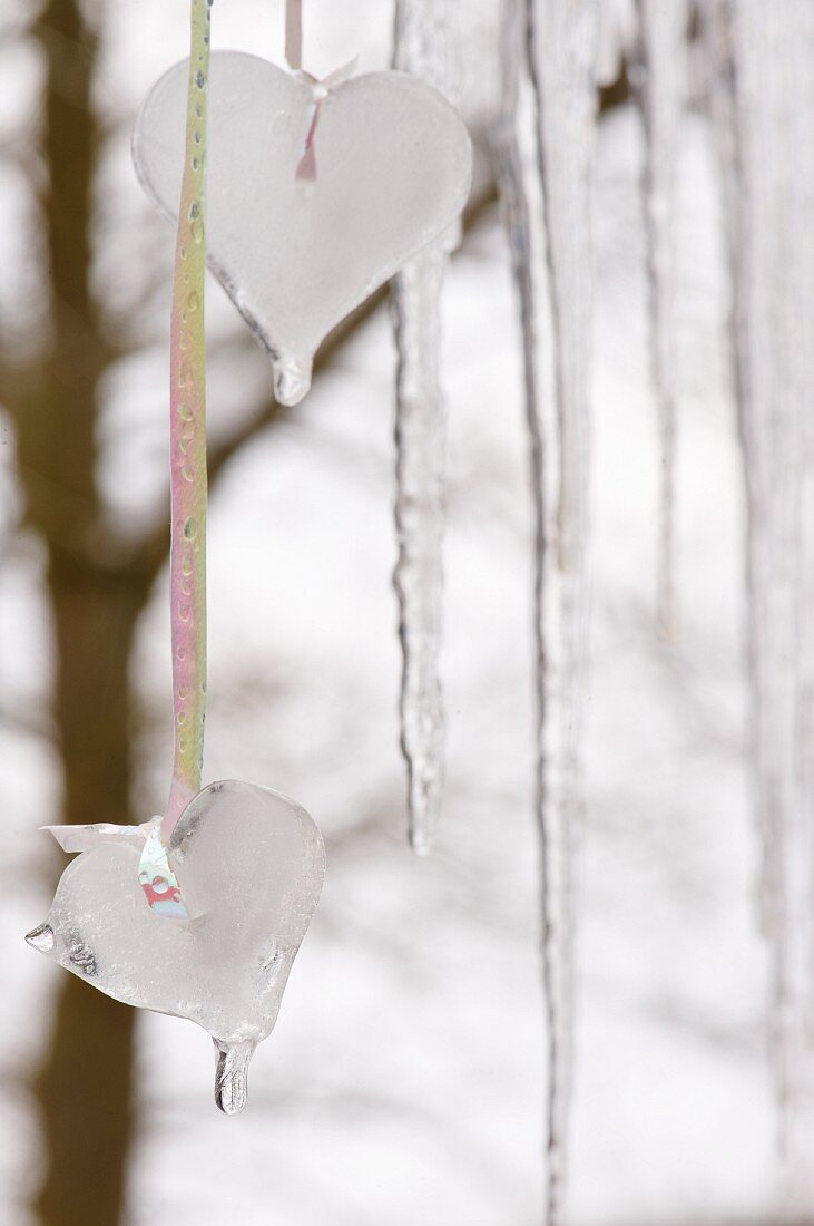 Winter decorations: ice hearts made in baking trays and hung outside in front of window