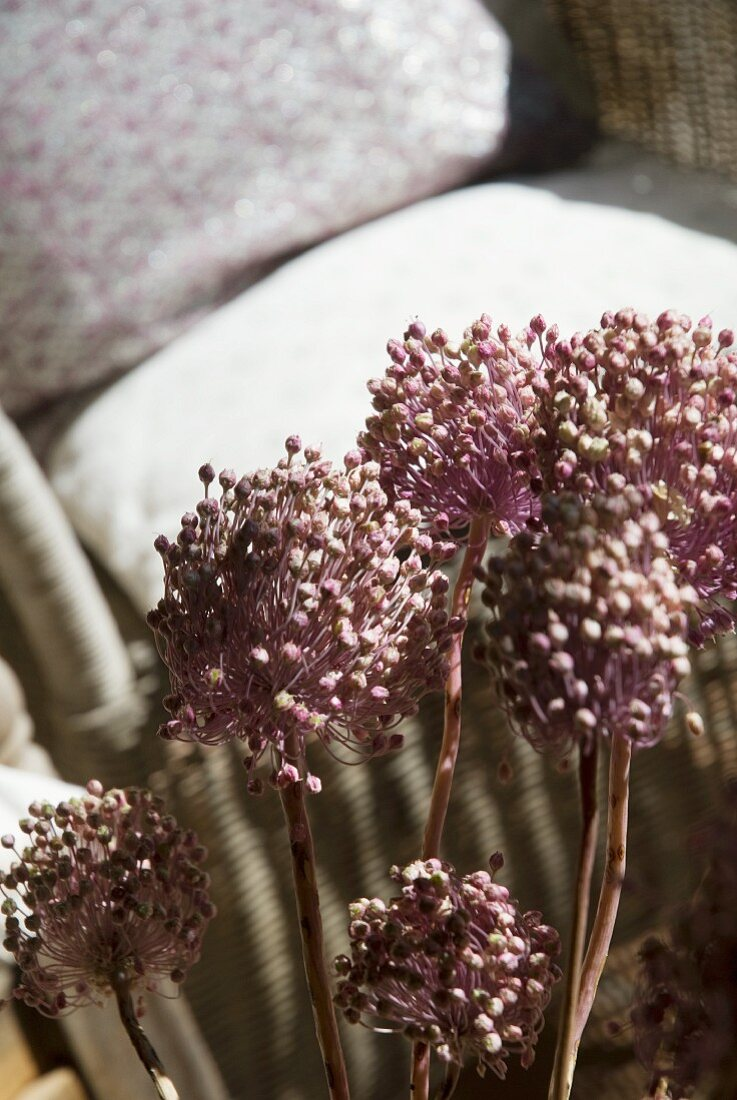 Seed heads in front of armchair with loose cushions