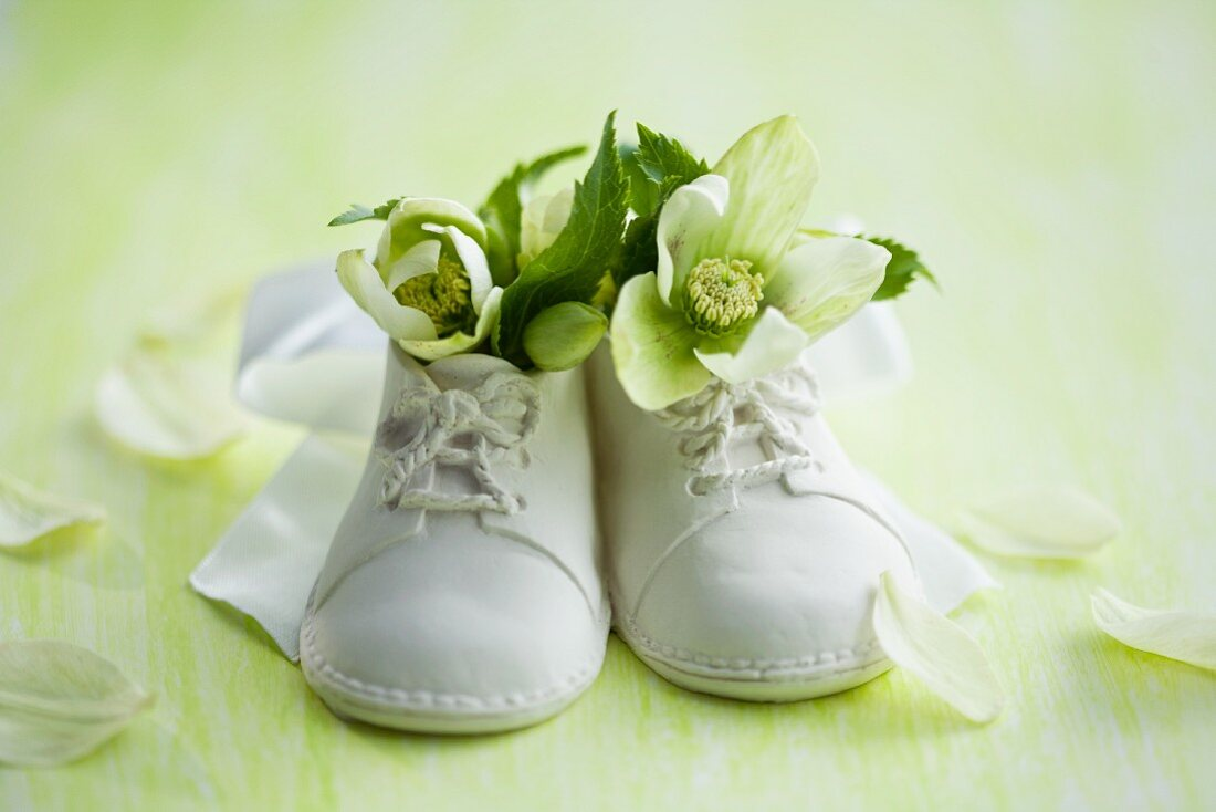 Hellebores in baby shoes