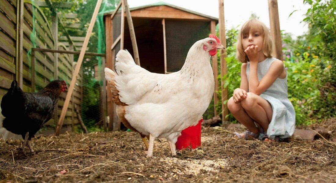 Germany, Brandenburg, Girl on hen farm – Buy image – 11165790 ❘ living4media