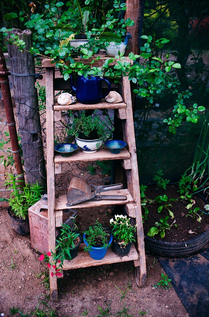Blue ceramic plant pots and bowls on old wooden stepladder leaning against wire fence