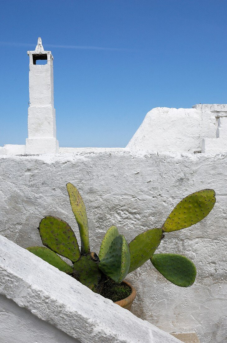 Potted prickly pear amongst whitewashed walls