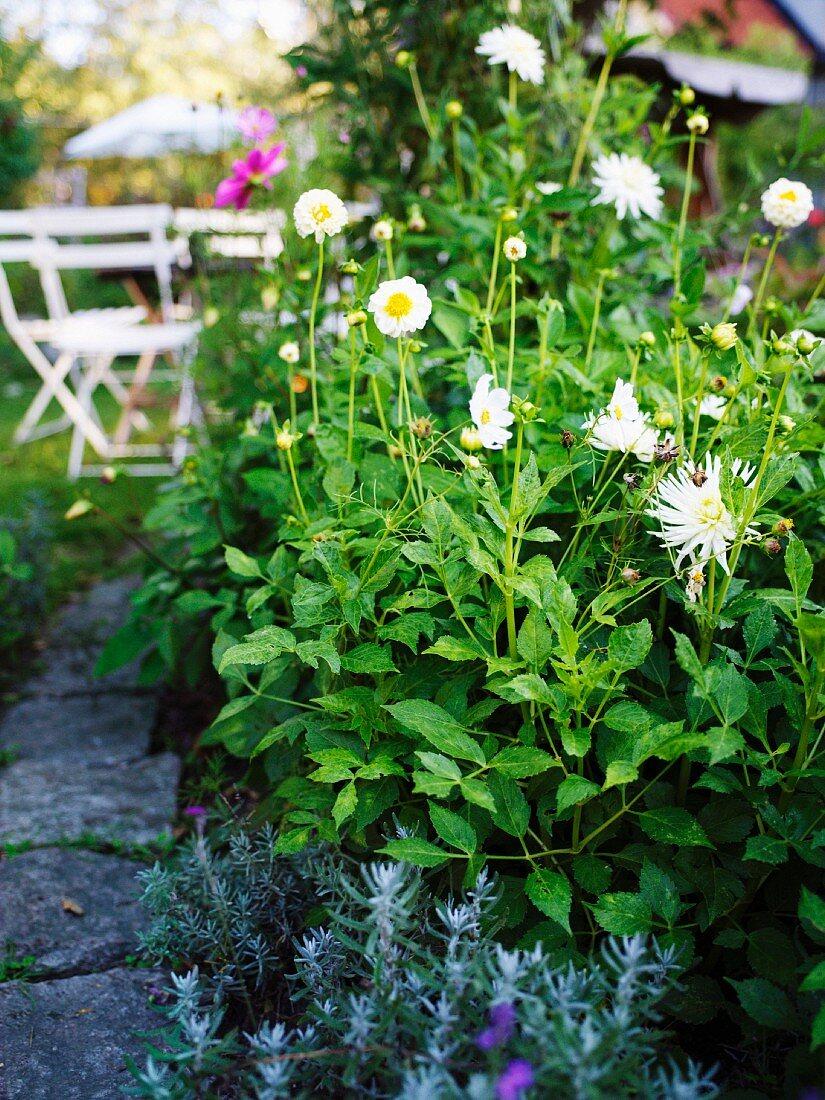 A flourishing garden, Sweden