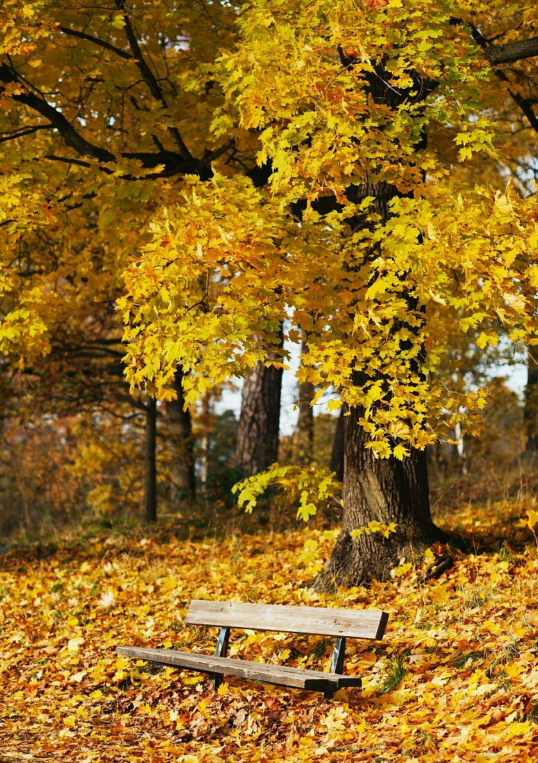 Park bench covered with autumn leaves
