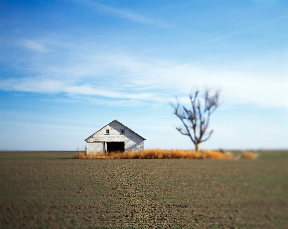 Barn and Tree in Field