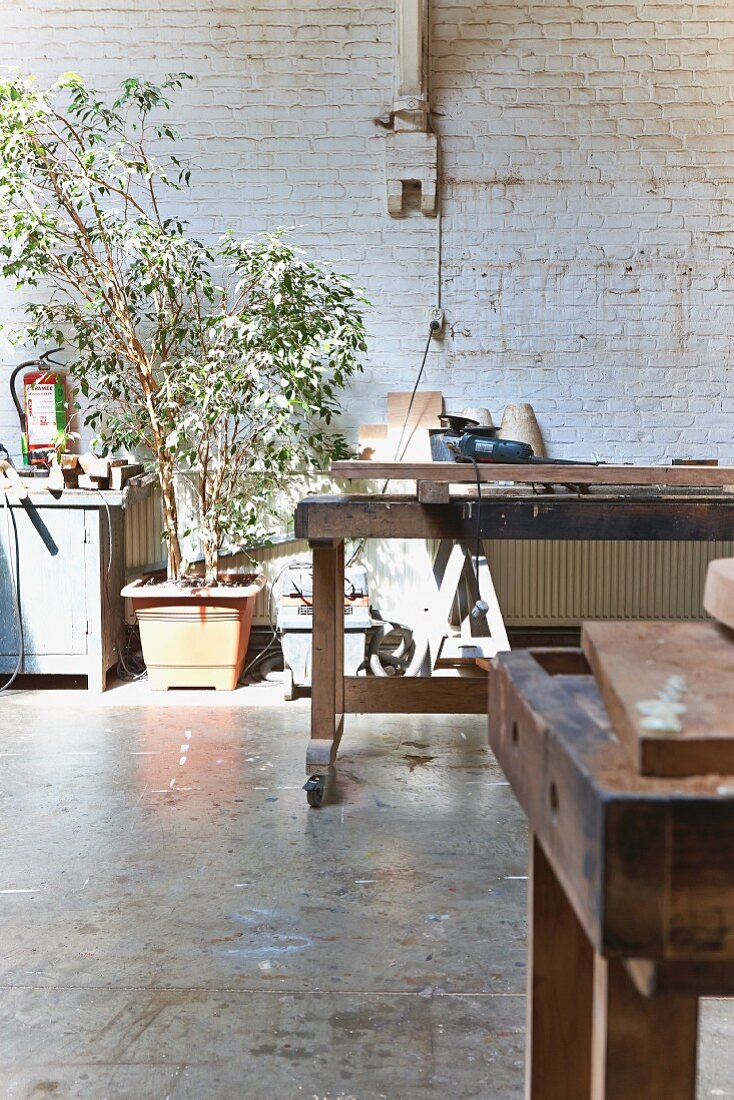 Workbench in front of green houseplants against whitewashed brick wall in rustic carpenter's workshop