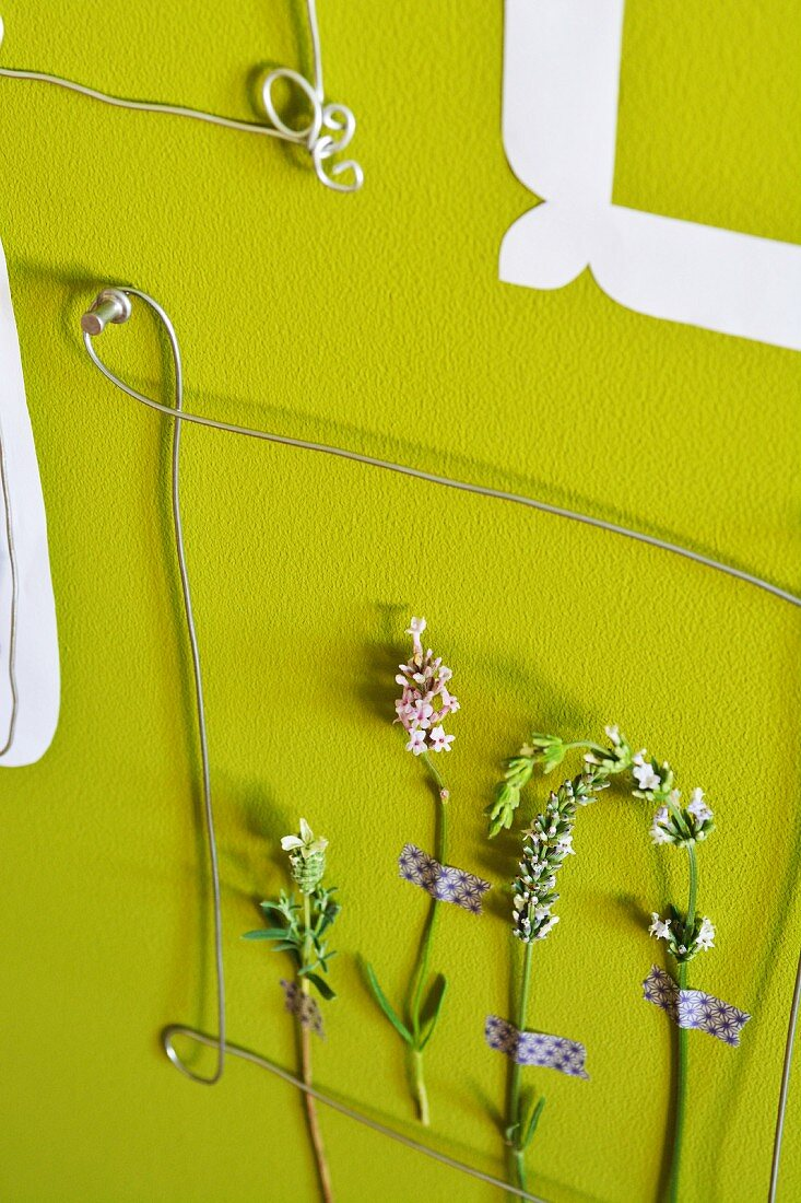 Stems of lavender in wire paper picture frame on green wall