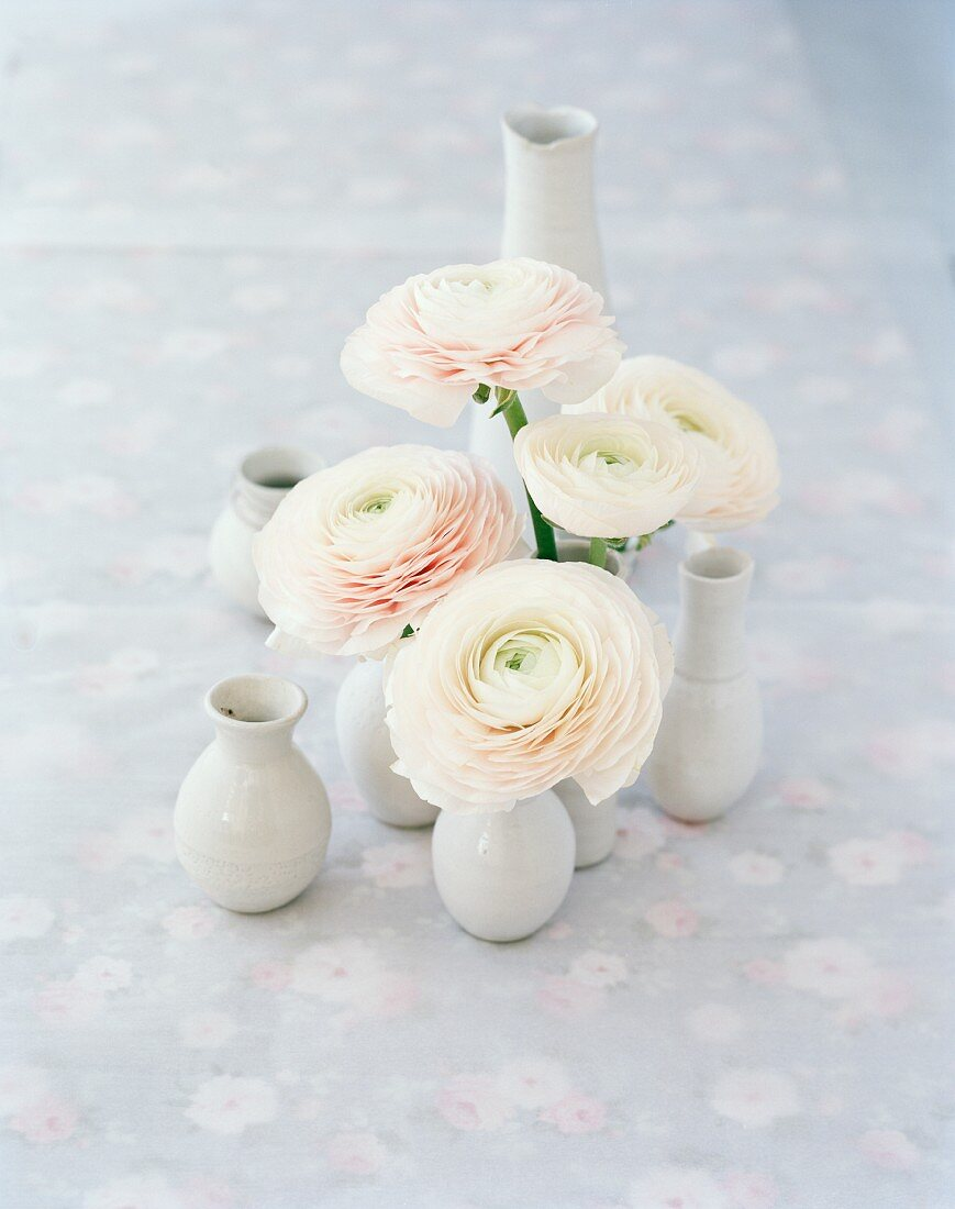 White ranunculus in vases