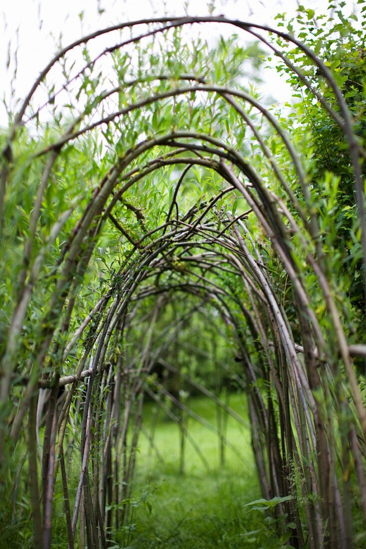 A willow tunnel in a garden