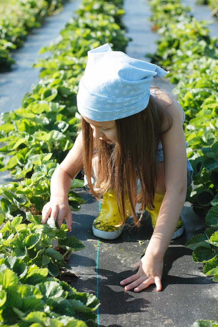 A girl picking strawberries in a field