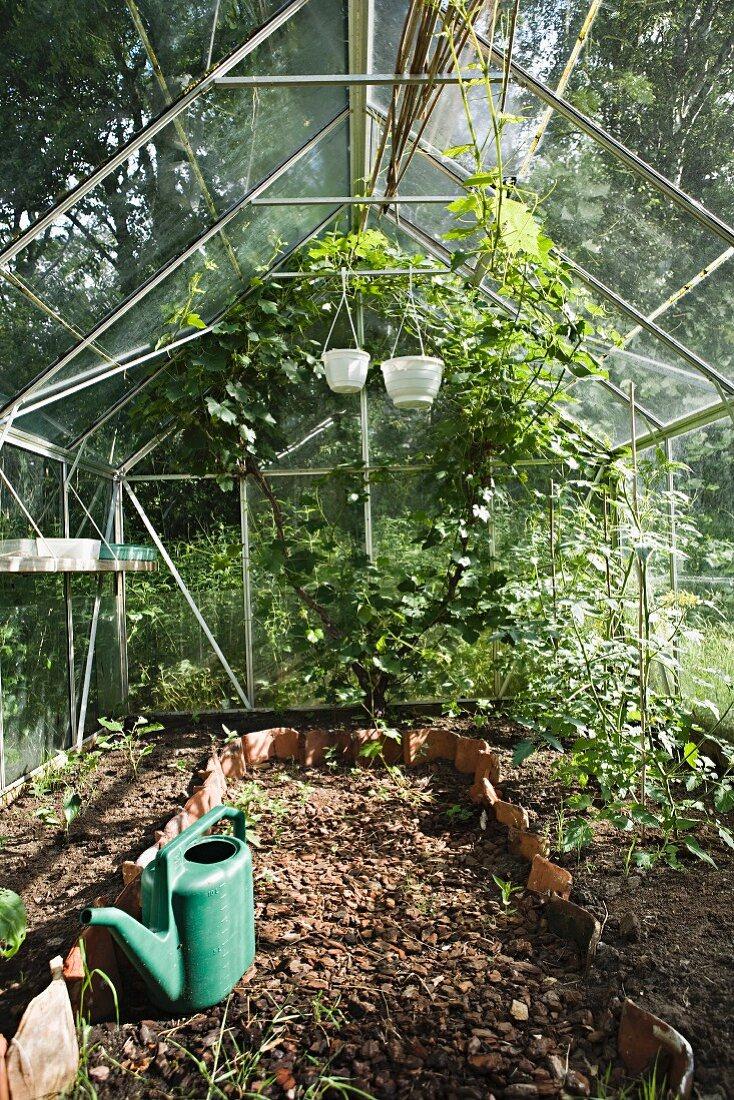 Greenhouse in the garden (Sweden)