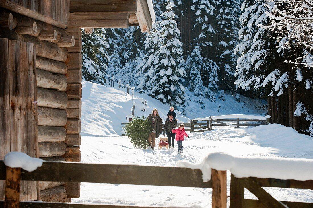 Familie wandert durch mit Christbaum und Schlitten durch Schneelandschaft zur Almhütte