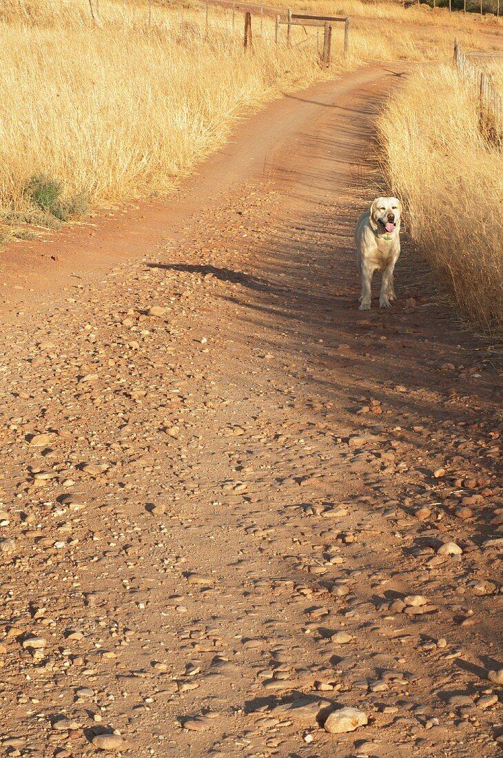 Dog on dirt track