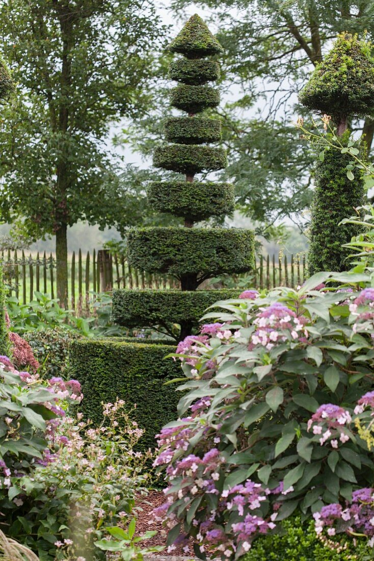 Topiary Yew Tree In Autumnal Garden Buy Image 11429820 Living4media