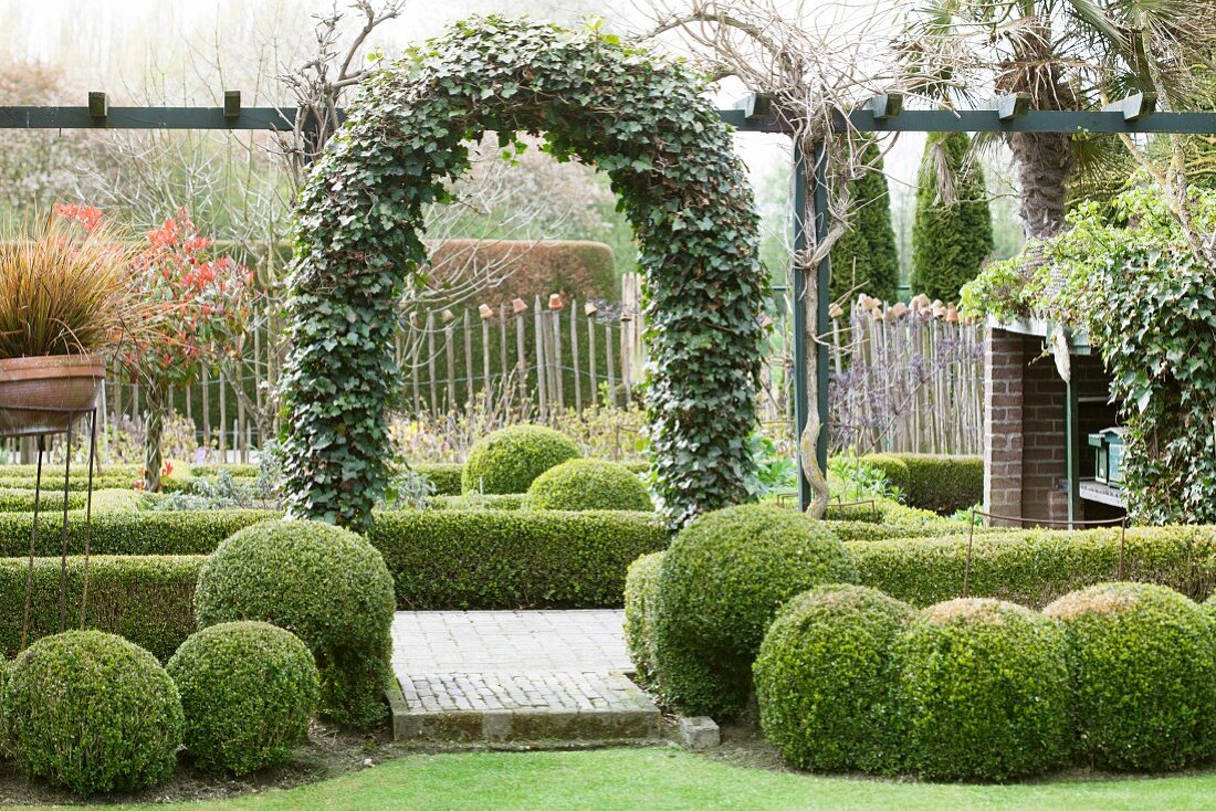 Ivy covered trellis arch and box balls … – Buy image – 20 ...