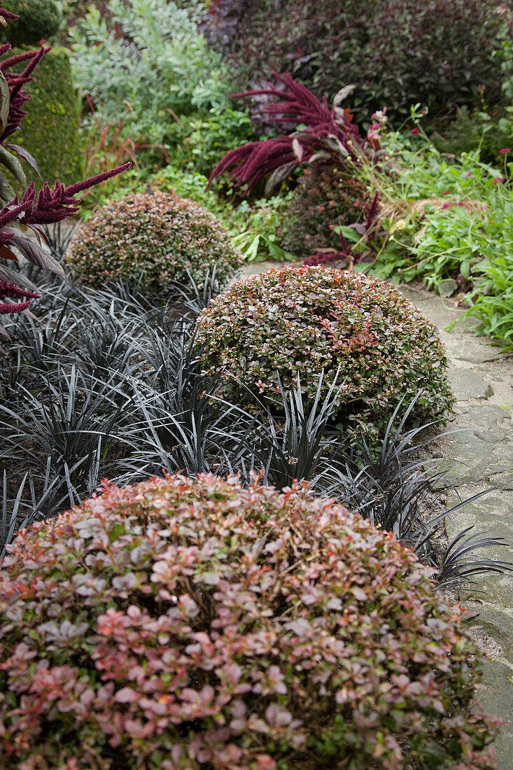 Clipped berberis spheres and lilyturf leaves
