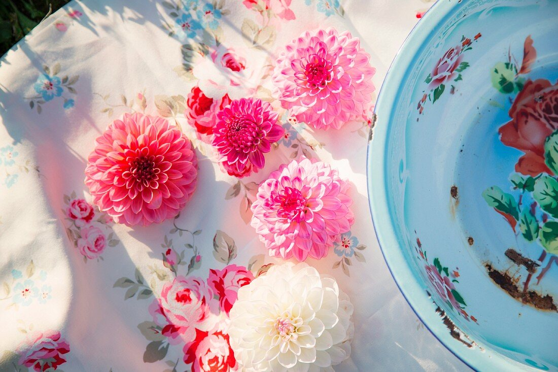 Pink and white dahlia flowers on vintage-style tablecloth