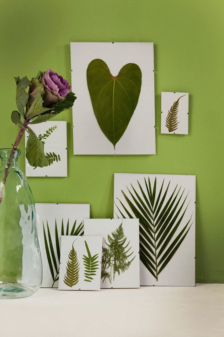 Various pressed leaves in clip-on picture frames on green-painted wall with ornamental cabbage in vase to one side
