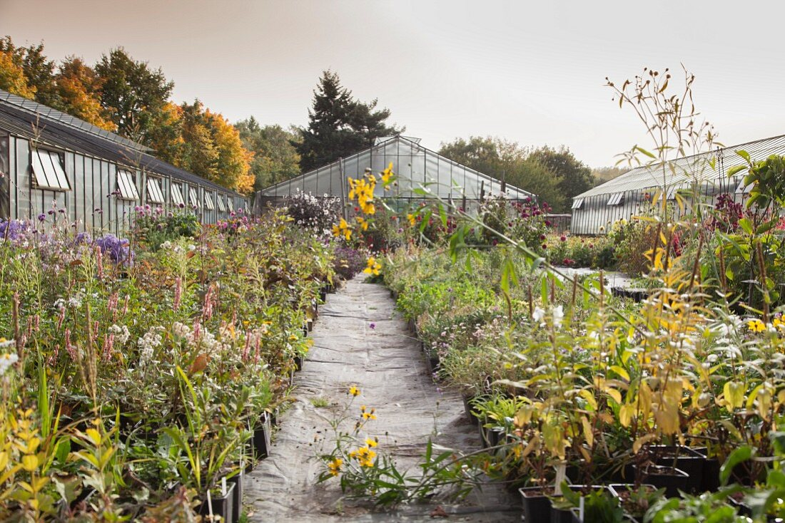 Perennials nursery in autumn